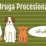 Oruga Procesionaria y Perros: Todo lo que debes saber para evitar el desastre