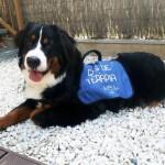 Encargo Especial: Peto de Terapia para Perro