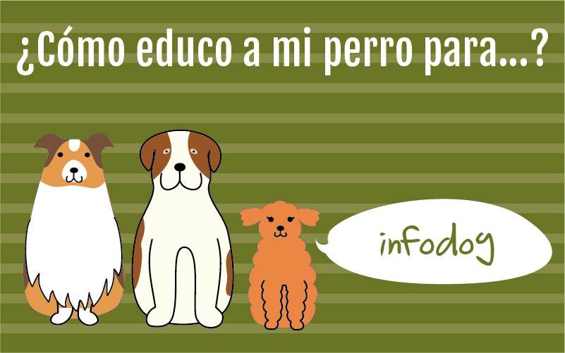 ¿Cómo educo a mi perro para…?
