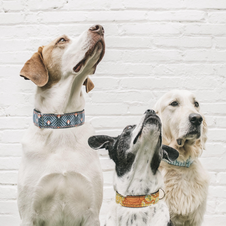 213dc15e6107 Guía de tallas para perros