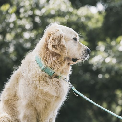 Collar para perro Océano